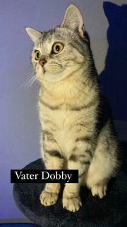 Katze bebey