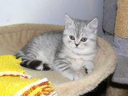 Whiskas Kitten wieder da