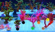 Meerwasser Korallen Ab 1 - Euro