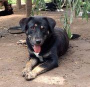 Dolly sucht hundeerfahrene Menschen