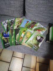 Zeitschrift Papageien