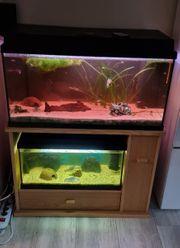 120 60L Aquarium zu verkaufen