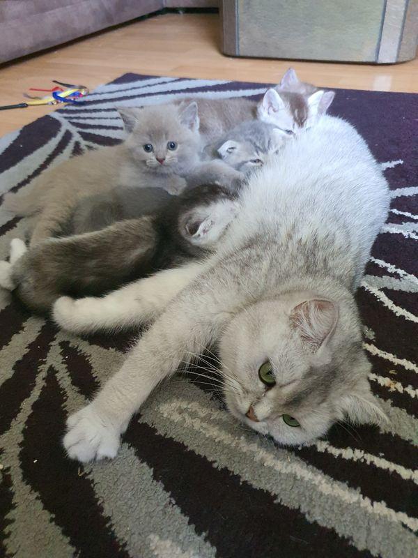 BKH Katzen