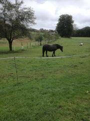 Einstellplatz für Pferde