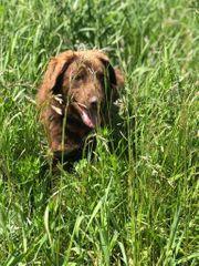 Rüde Arno sucht ein schönes