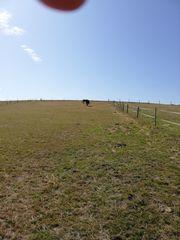 Sommerplatz für Stute mit Fohlen