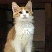 Ruhiger Katzenbub Lucky möchte gern