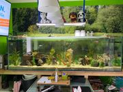 Aquarium 200x60x60cm Tiere Technik Deko