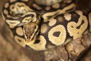 0 1 Pastel NZ09 - Python