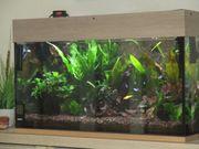 112 Liter Aquarium komplett mit