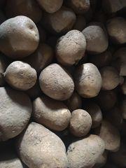 Kartoffeln aus eigenem Anbau frisch
