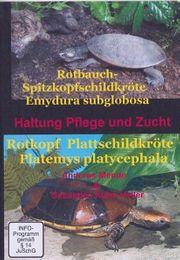 Rotbauch-Spitzkopfschildkröte Rotkopf - Plattschildkröte Haltung Pflege