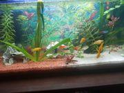 Aquarium Pflanzen