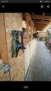 Stellplatz Box für Pony Shetty
