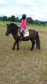 Pony Stute abzugeben