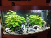 Aquarium 250 Liter