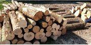 Meterabschnitte Stammholz Weichholz Brennholz
