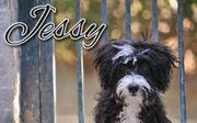 Hat Jessy Ihr Herz berührt