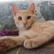 Verspieltes Kätzchen Sammy möchte Deine