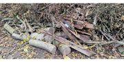 Brennholz ganze Baumstämme