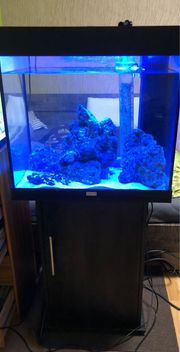 Meerwasser Aquarium komplett mit Gestein