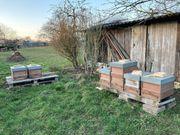 Bienen Carnica