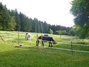 Stall Pferdestall für Selbstversorger