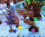 Meerwasser Ableger Update 1 2