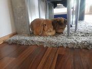 Lilli und Sissi suchen ein
