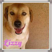 Lizzy artgenossenverträgliche Hundedame braucht Hilfe