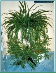 Naturzeolith macht ihre Pflanzen fit