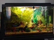Aquarium komplett mit Fische Garnelen