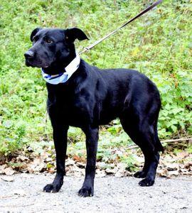 BLACK PRIMUS - möchte auf seine: Kleinanzeigen aus Rabenau - Rubrik Hunde