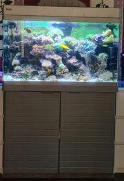 Meerwasser Aquarium Red Sea 250L