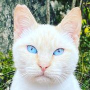 Katze Sky-La sucht ihre Menschen