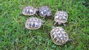 Landschildkröten von 2020