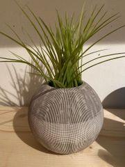 Dekopflanze mit Topf