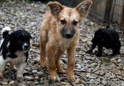 rumän liebe Hunde unterschiedliches Alter