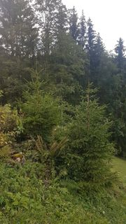 Waldparzellen im Vorderwald gesucht