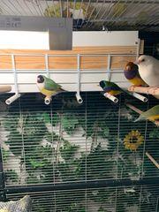 wunderschöne Bunte Vögel