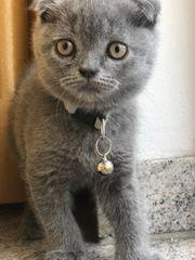 Kitten Zubehör