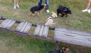 Leinen los - Hundetreffen -Welpen und Junghunde