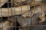 Holz Kaminholz Feuerholz Brennholz