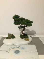 bonsai das perfekte Bonsai fur