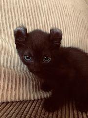 Kleiner Kater und Katze sind