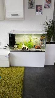 Reserviert Eheim 112l Aquarium mit