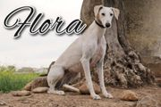 Darf Flora nun die Liebe
