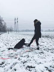Hundebetreuung Gassi gehen