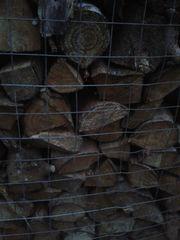 Brennholz von Frühjahr 2019