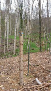Baum - Grabstätte im Friedwald Ebermannstadt